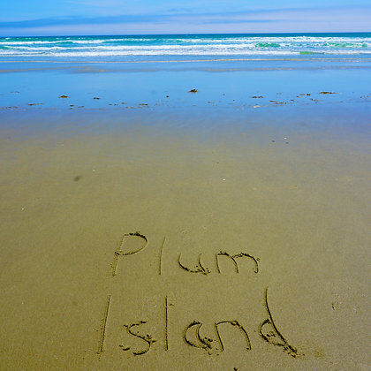 Plum Island Sand (made to order)