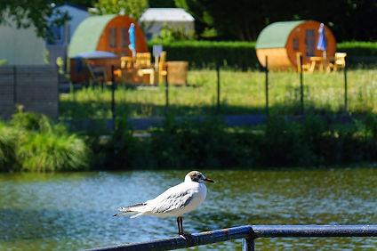 etang_camping_du_bois_vert_02_2021.jpg