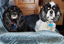 Mitzi & Athena.jpeg