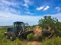 Kansas Tree Service