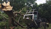 Missouri Tree Service
