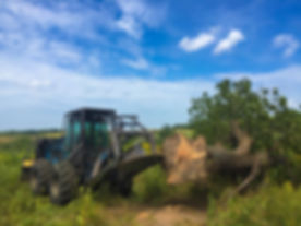 Arens Land Clearing Tree Cutting