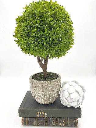 Miniature Boxwood ball plant in stone look pot