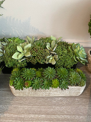 Succulents in Concrete Container