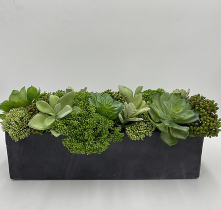 Succulents & Skimmia Arrangement