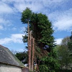Cypress Ann Villa