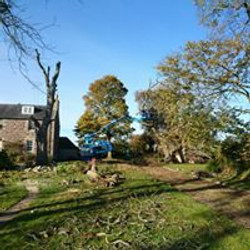 Felling dead elms over a listed Ducot and a sycamore fell