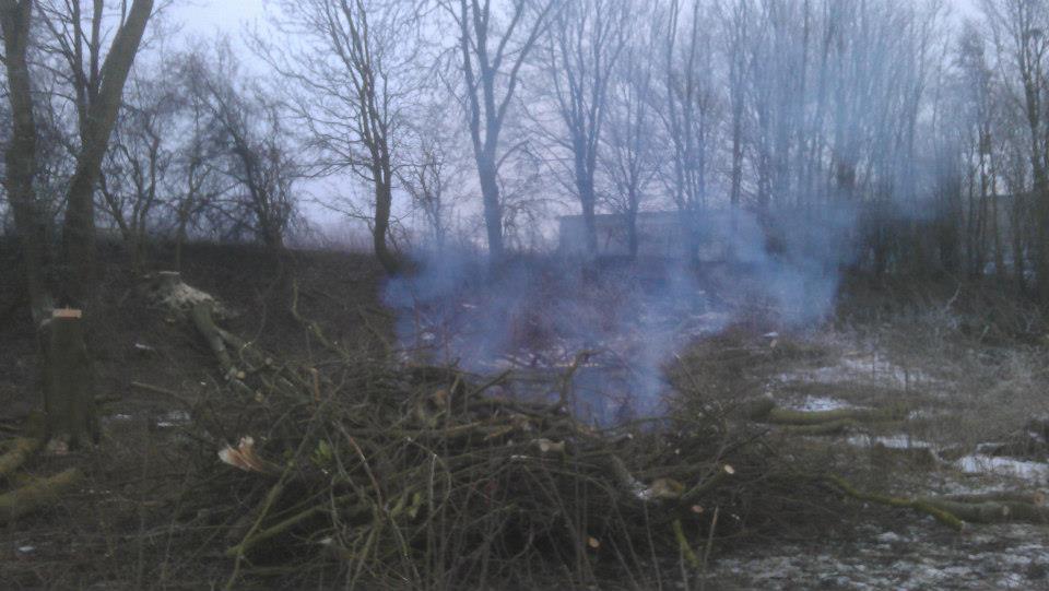Burning forestry brash