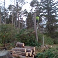 section felling timber Hope Estate