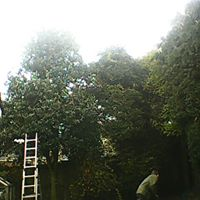 Large hedge cutting work