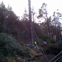 Felling 60ft of sytka spruce froma 90ft tree
