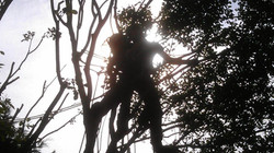 Climber siloette