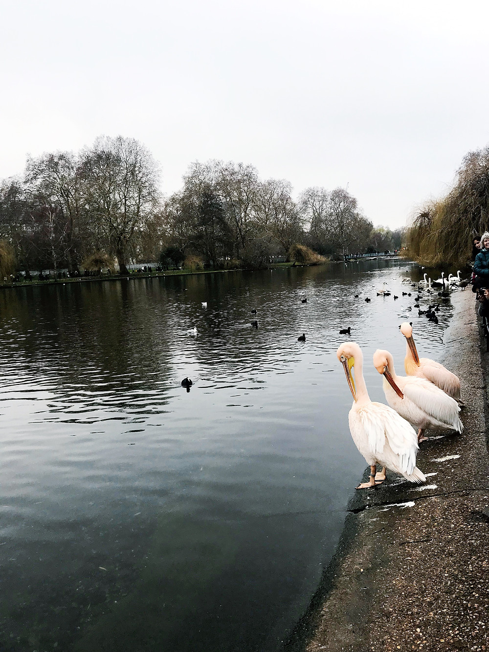 healthy London travel - Hyde park