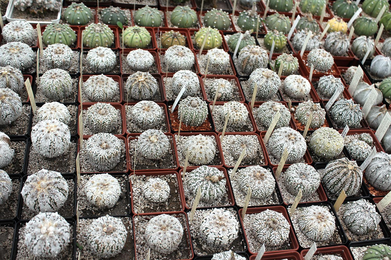 ярмарка кактусов и суккулентов CACTUS FEST