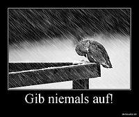 FB_IMG_1483007154714[1].jpg