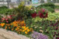 garden 2019 1.jpg