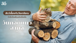 """สัตว์เลี้ยงกับวัยเกษียณ รำลึกถึงเพื่อนรักเนื่องใน """"วันกอดแมวสากล"""""""