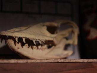Mutant skull in underground lair archives