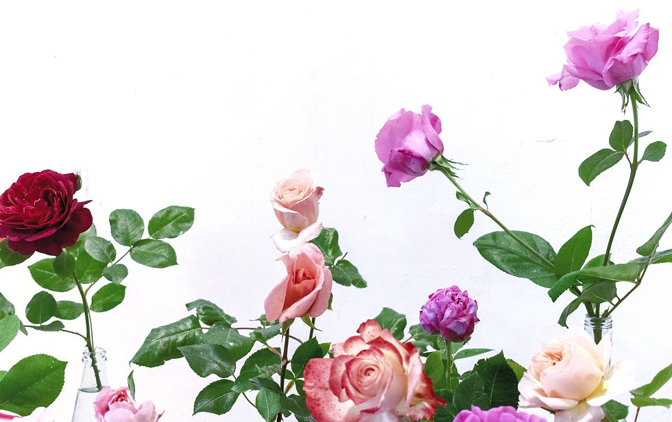 pink%2520rose%2520flower_edited_edited.jpg