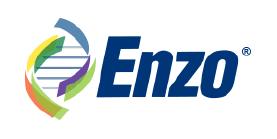 Enzo 2019