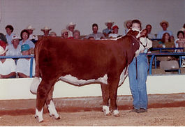 Lisa Bryant showing a Hereford heifer at the All-American Junior Hereford Expo in Murfreesboro,Tennessee.