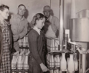 Louise Bryant bottles milk on her family's Jersey dairy.
