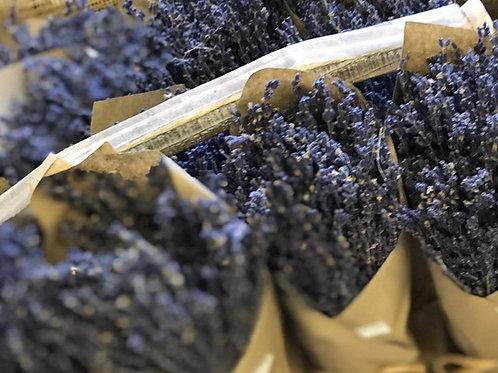 Dried English Lavender bundle