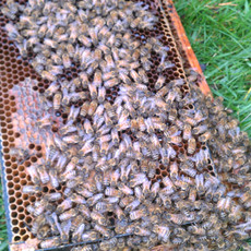 Part of a torn apart bee hive.  Those crazy bears!