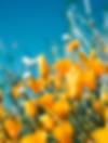 Screen Shot 2020-04-08 at 9.53.06 PM.png