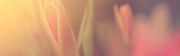 Flor en la luz del sol