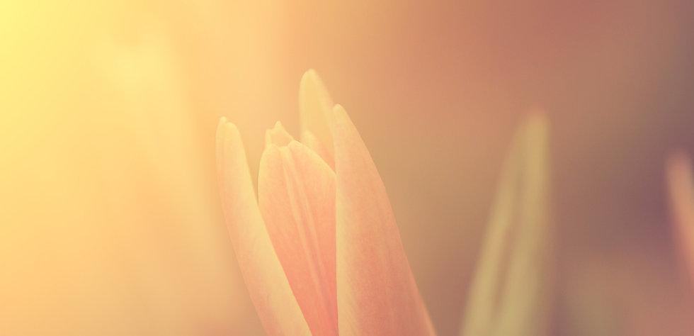 Blumen im Sonnenlicht