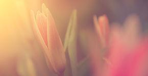 日光での花
