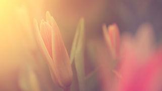 Fleur en plein soleil