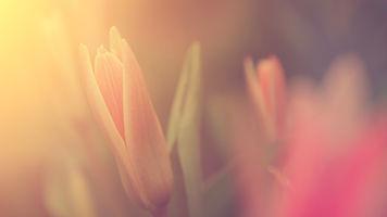 햇빛에 꽃