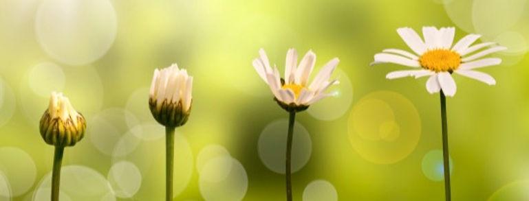 daisies_growing_kpjnzb_edited.jpg