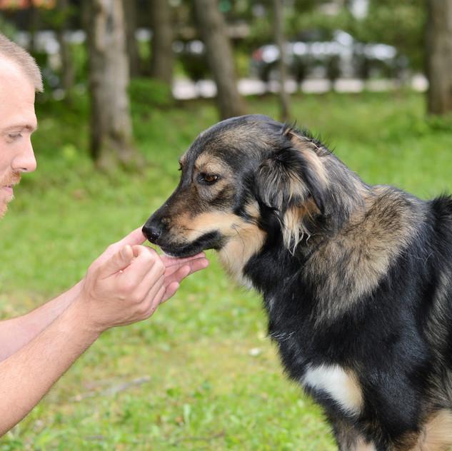 Présence animalière en thérapie 3