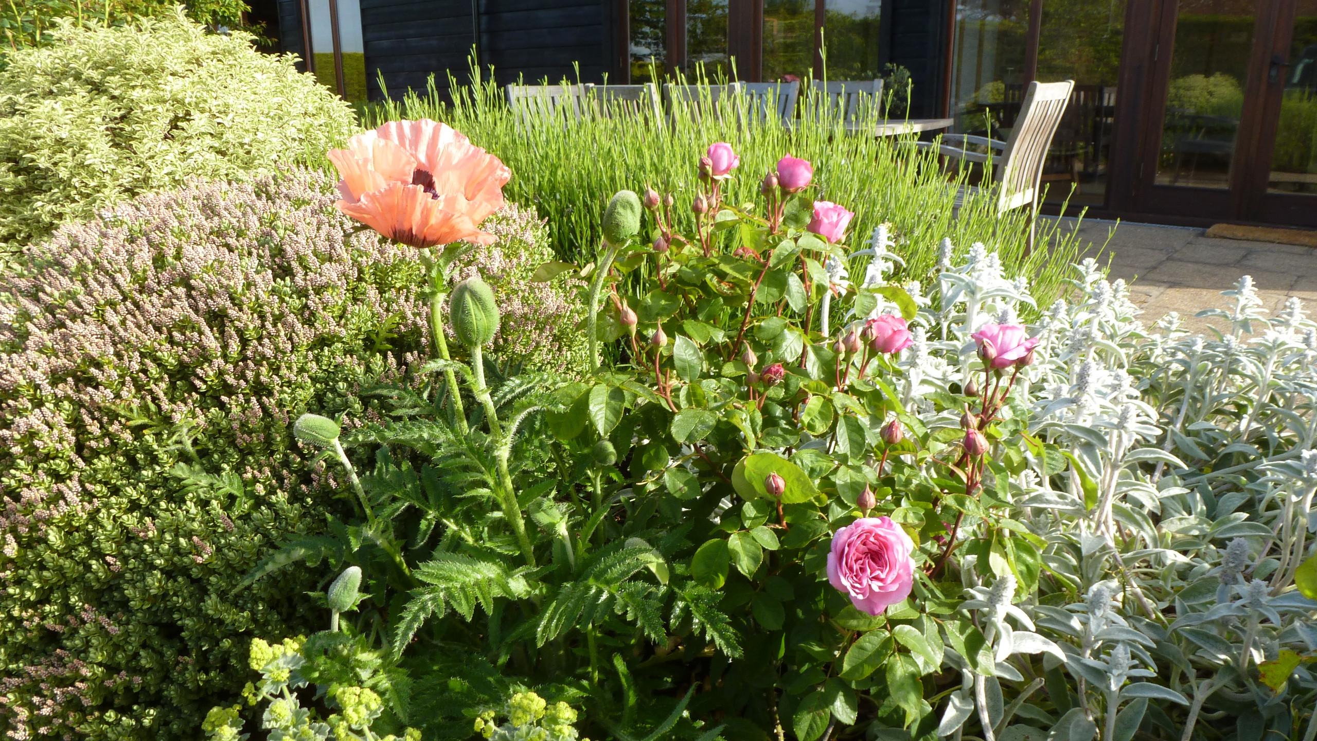 LittleNorlingtonBarn Gardens