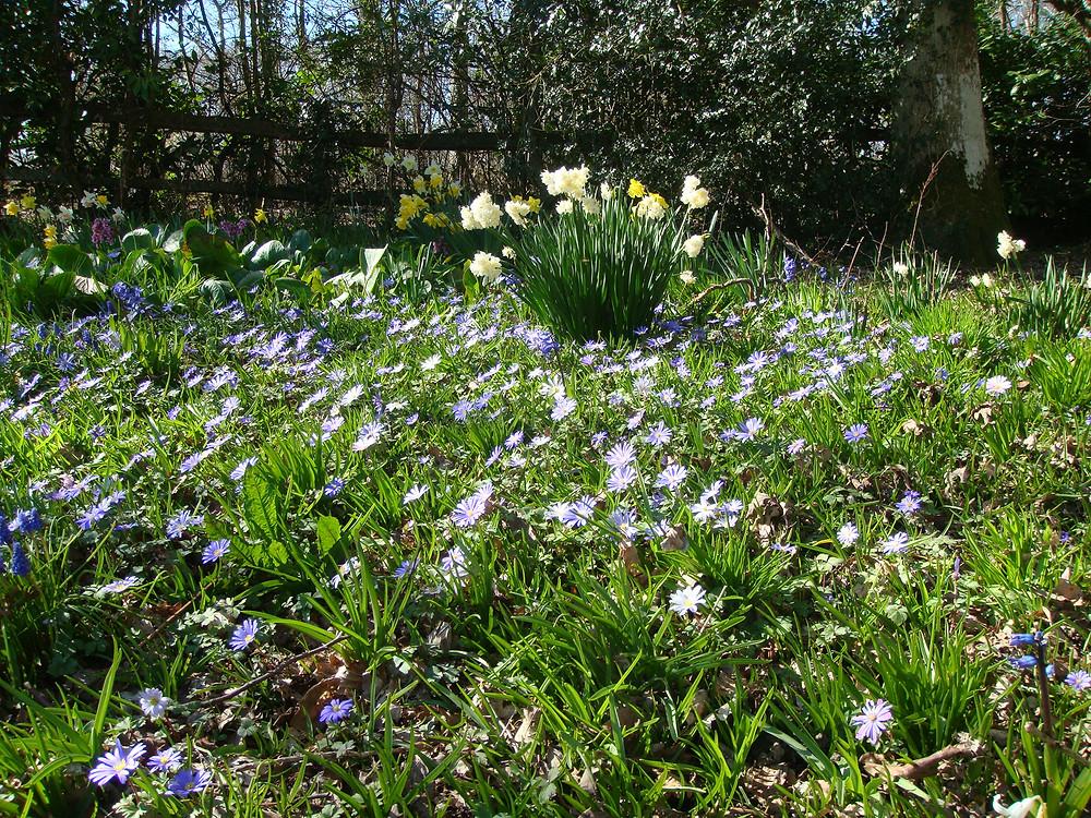 White Lodge B&B Lewes Springtime