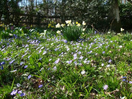 Spring Has Arrived White Lodge B&B