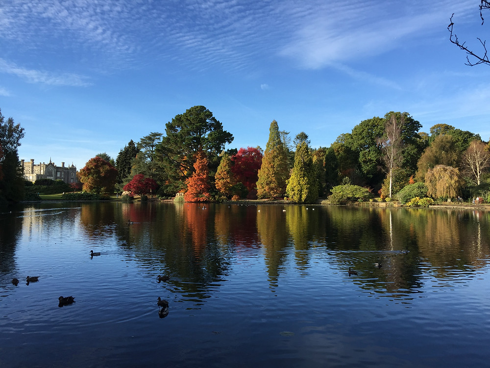 Sheffield Park near White Lodge B&B