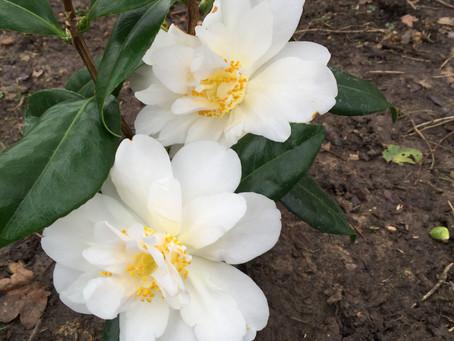 White Lodge Garden Renovation Begins