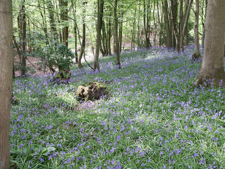 Bluebell Magical Walks!