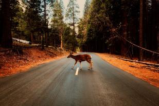Animais soltos em rodovias exigem atenção de motoristas