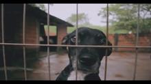 ONG cuida de animais vítimas de maus tratos