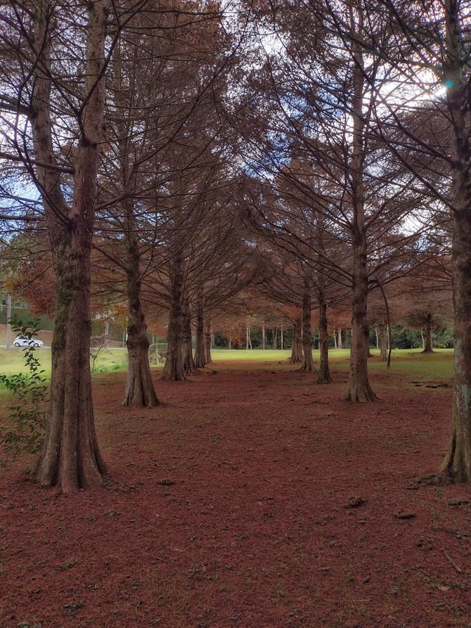 Com temperaturas frias e tons quentes, Parque Tingui ganha destaque em fotografias