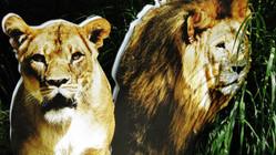 Noćni safari u Divljem srcu grada