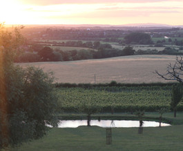 View of the Vineyard - July 2020