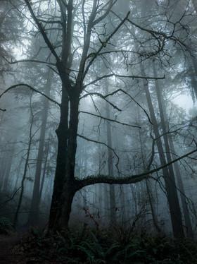 Forest Park, Portland, Oregon, USA