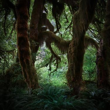 Ho Rainforest, Olympic Peninsula, Washington, USA