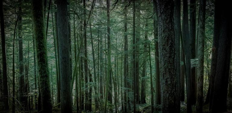 Forest Park, Oregon, USA